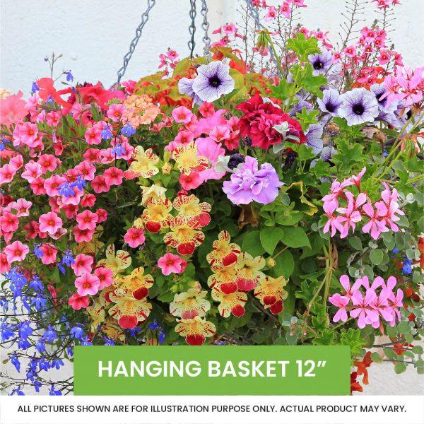 Hanging Basket 12inch