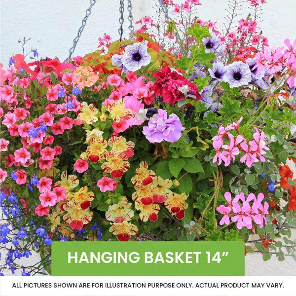 Hanging Basket 14inch
