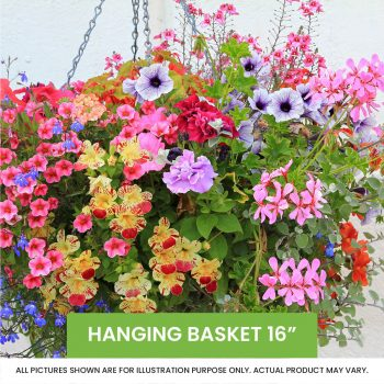 Hanging Basket 16inch