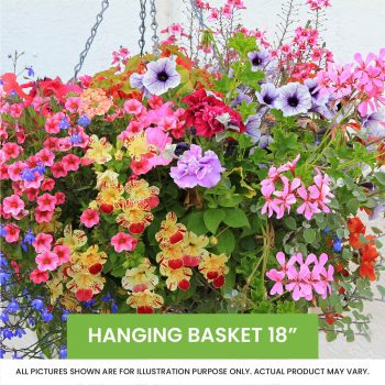 Hanging Basket 18 inch