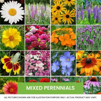 Perennials and Alpines