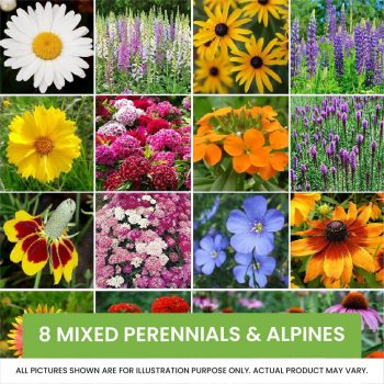 8 mixed perennials and alpines